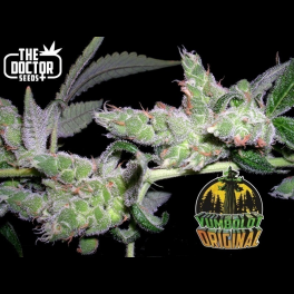 Semillas YUMBOLDT ORIGINAL The Doctor Seeds.