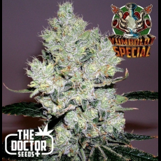 Semillas YUMBOLDT SPECIAL The Doctor Seeds.