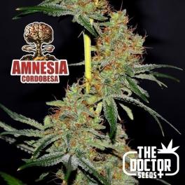 Semillas AMNESIA CORDOBESA The Doctor Seeds.