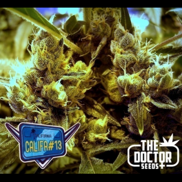 Semillas CALIFA 13 The Doctor Seeds.