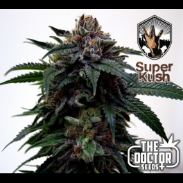 Semillas SUPER KUSH The Doctor Seeds.