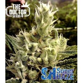 Semillas SUPER HAZE The Doctor Seeds.