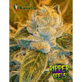 Semillas SOUR RIPPER Ripper Seeds.