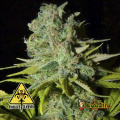 Semillas BIG LIGHTS Biohazard Seeds.
