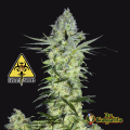 Semillas GODDESS KALI Biohazard Seeds.