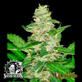 Semillas AUTO SUPER SKUNK Sensi Seeds.