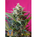 Semillas BIG DEVIL XL AUTO Sweet Seeds.