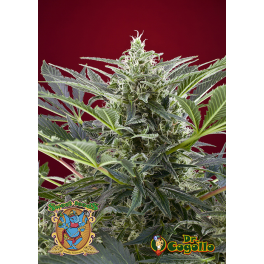Semillas CREAM 47 Sweet Seeds.