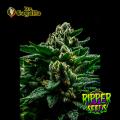 Semillas DO-G Ripper Seeds.